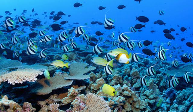 Le Parc Natural de la Mer De Corail