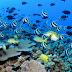 New Caledonia ini punya taman laut terbesar didunia lohh
