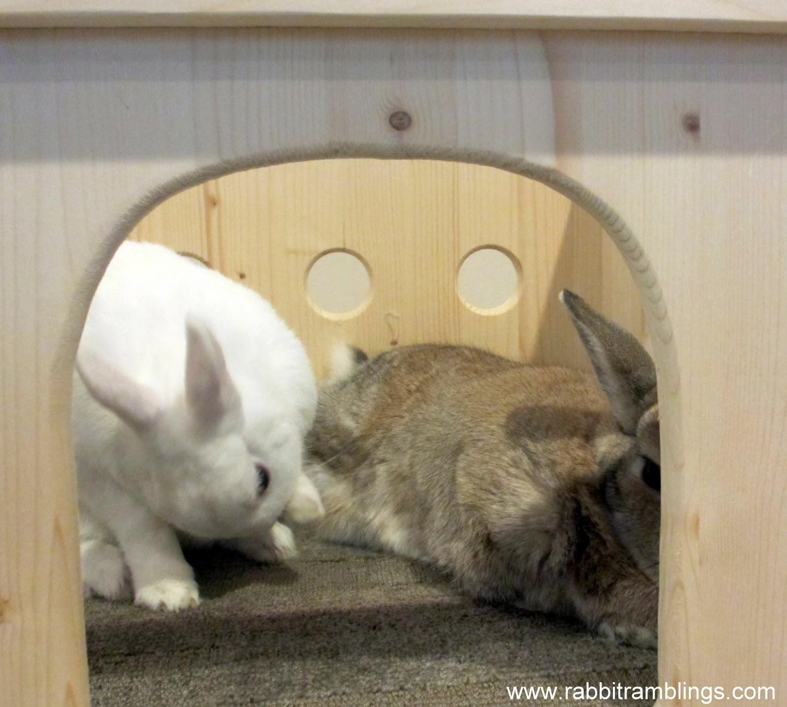Bunny Castle Bunny Chew Castle
