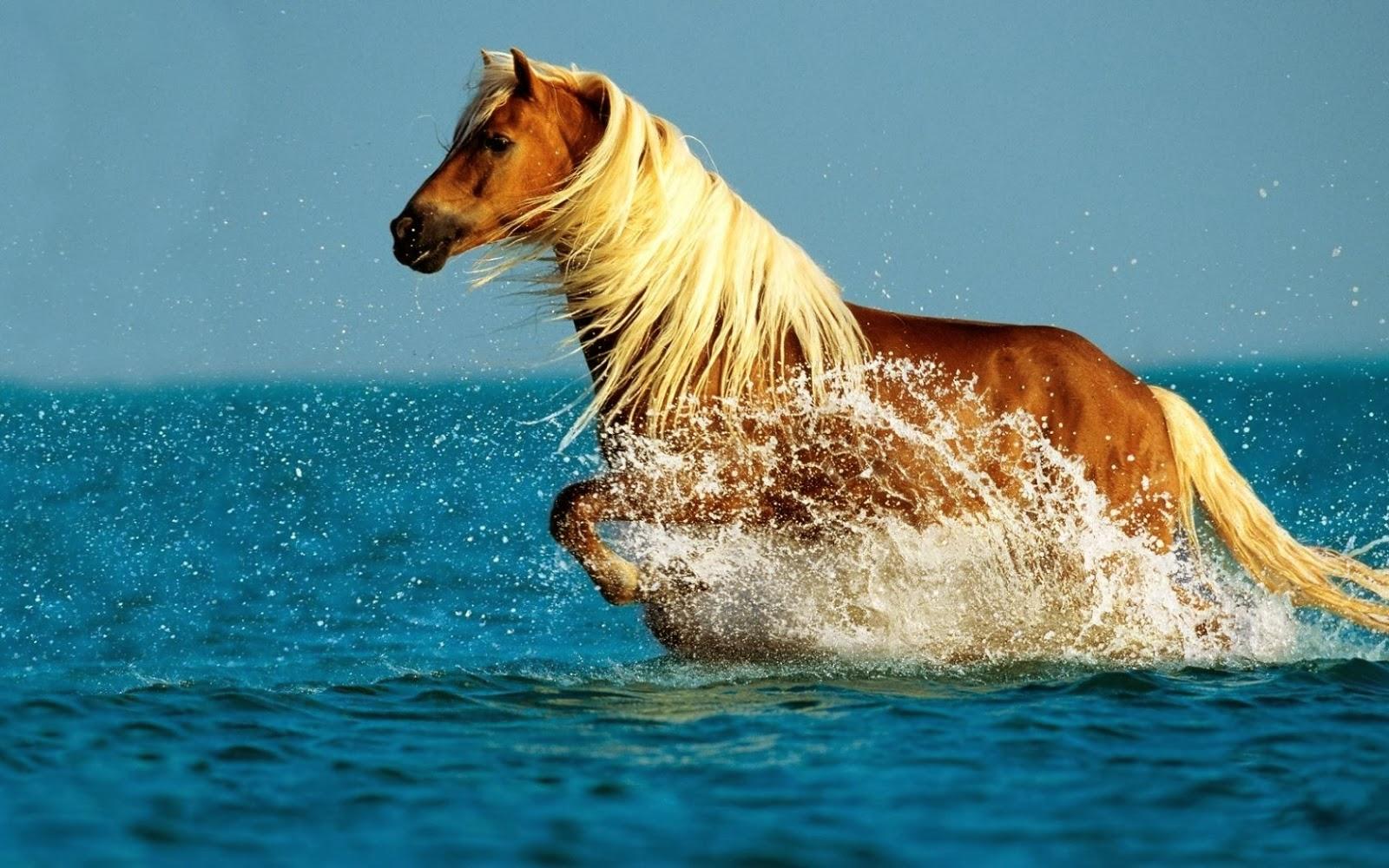 hermoso caballo corriendo en la playa