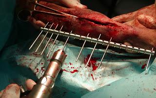 fijador FESSA artrodesis perro