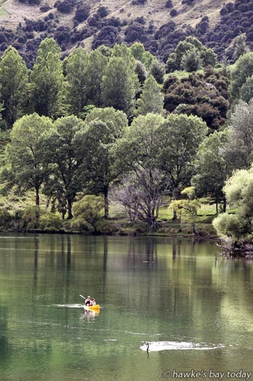 Mutual interests, canoeists and swan paddle on Lake Tutira photograph