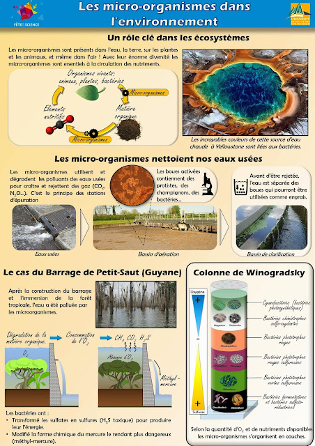 winogradsky, station epuration, barrage pollution par les bactéries
