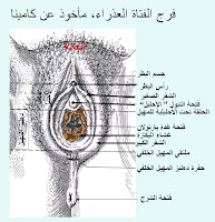الاوضاع الجديدة للجماع http://www.fatakaty.blogspot.com/2011/04/blog-post_4474.html