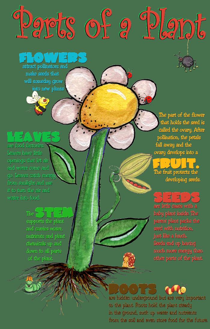 Resultado de imagen de THE PLANTS