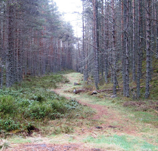 Deeside Walks: path up Pannanich, the trail leading down