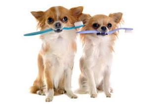 pet dental scale and polish animal dental