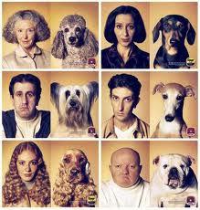 Parecidos Perro - Amo Razonables