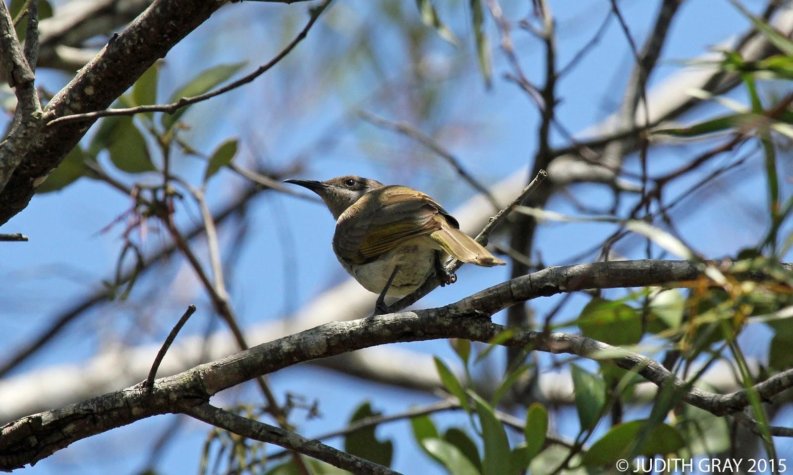 beyond our patch australian birds environment wildlife travel