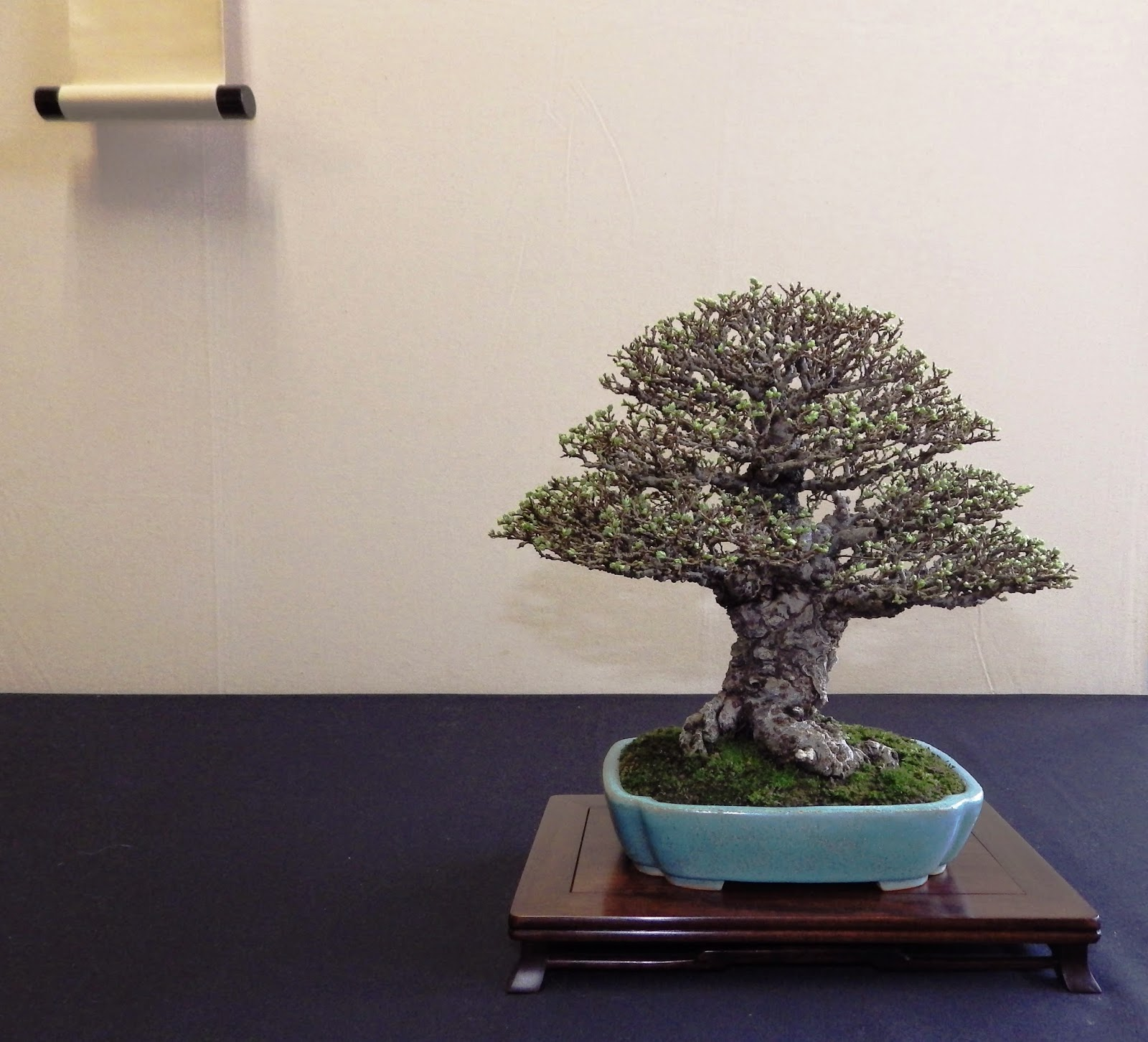 Bespoke Bonsai Stands March 2015