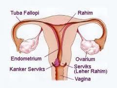 Menjaga Kesehatan Reproduksi Wanita