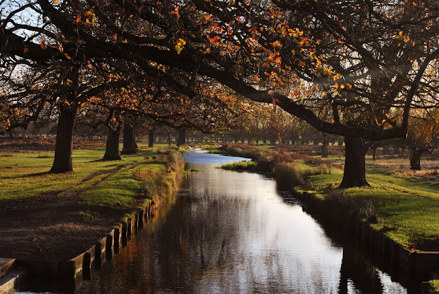 Bushy Park, London