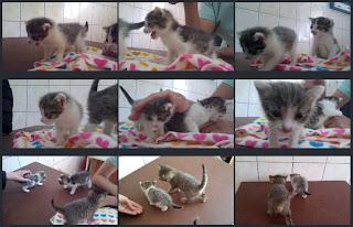 Fundacja Agapeanimali, bawiące się kociaki