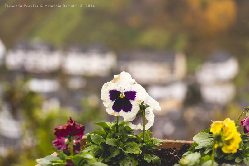 Flores do Castelo de Reichsburg