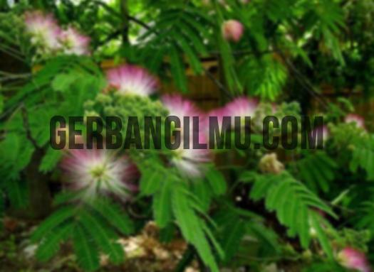 Rangkuman Gerak Pada Tumbuhan