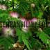 Rangkuman Gerak Pada Tumbuhan, Biologi