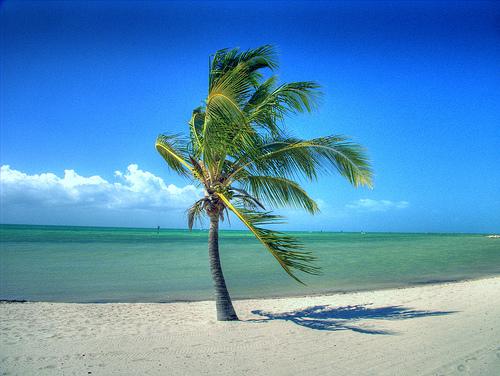 http://3.bp.blogspot.com/-l6bBc37nEzE/TasPK1HDNiI/AAAAAAAACrE/Lcu-zSZ1iUs/s1600/palm_trees-11940.jpg
