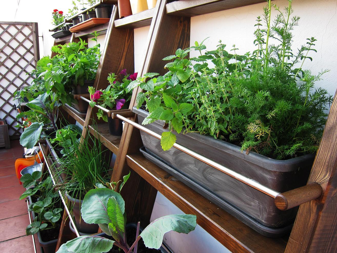 Pipoca and her things jardines verticales - Jardines verticales plantas ...