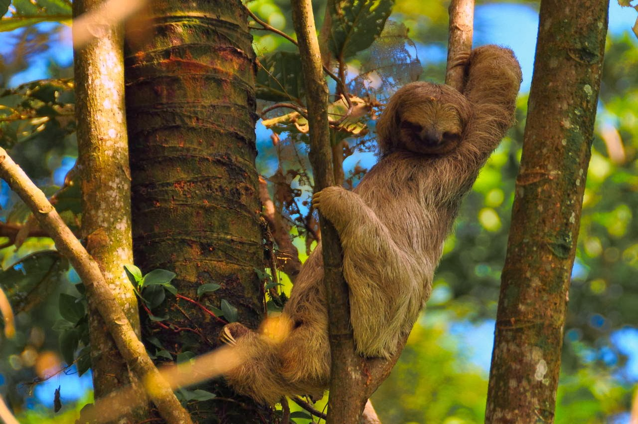 Funny animals of the week - 14 February 2014 (40 pics), sloth relaxing in the tree