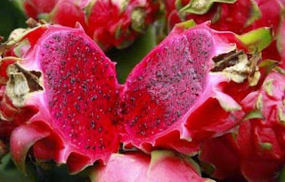 Efficacy of red dragon fruit