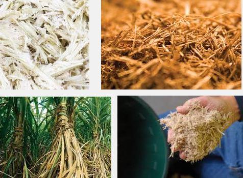Sugarcane fibre waste
