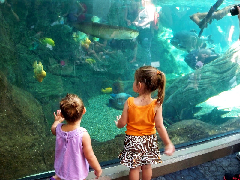 looking into the large aquarium