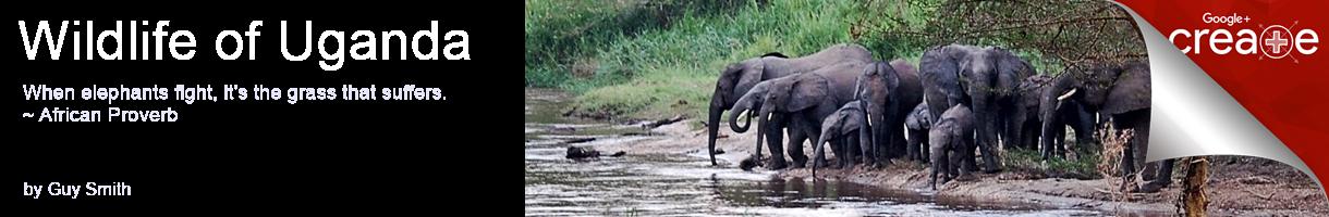 Wildlife of Uganda