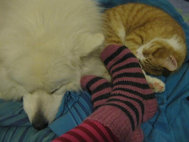 kissa ja koira ystävykset