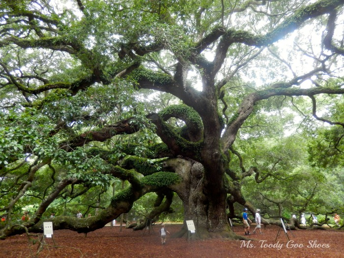 #AngelOakTree Johns Island, SC --- Ms. Toody Goo Shoes