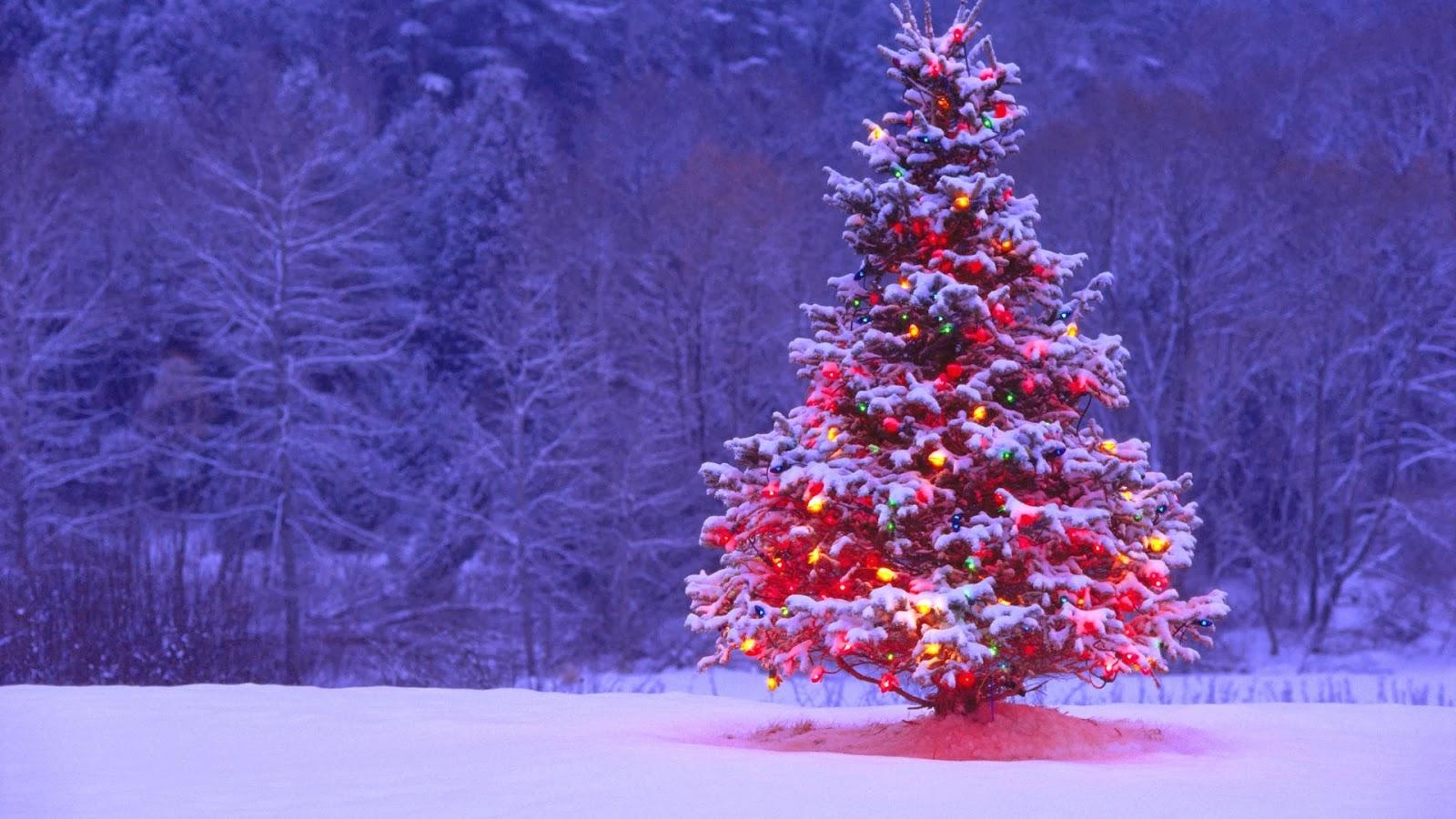beautiful christmas tree wallpapers hd tapandaola111
