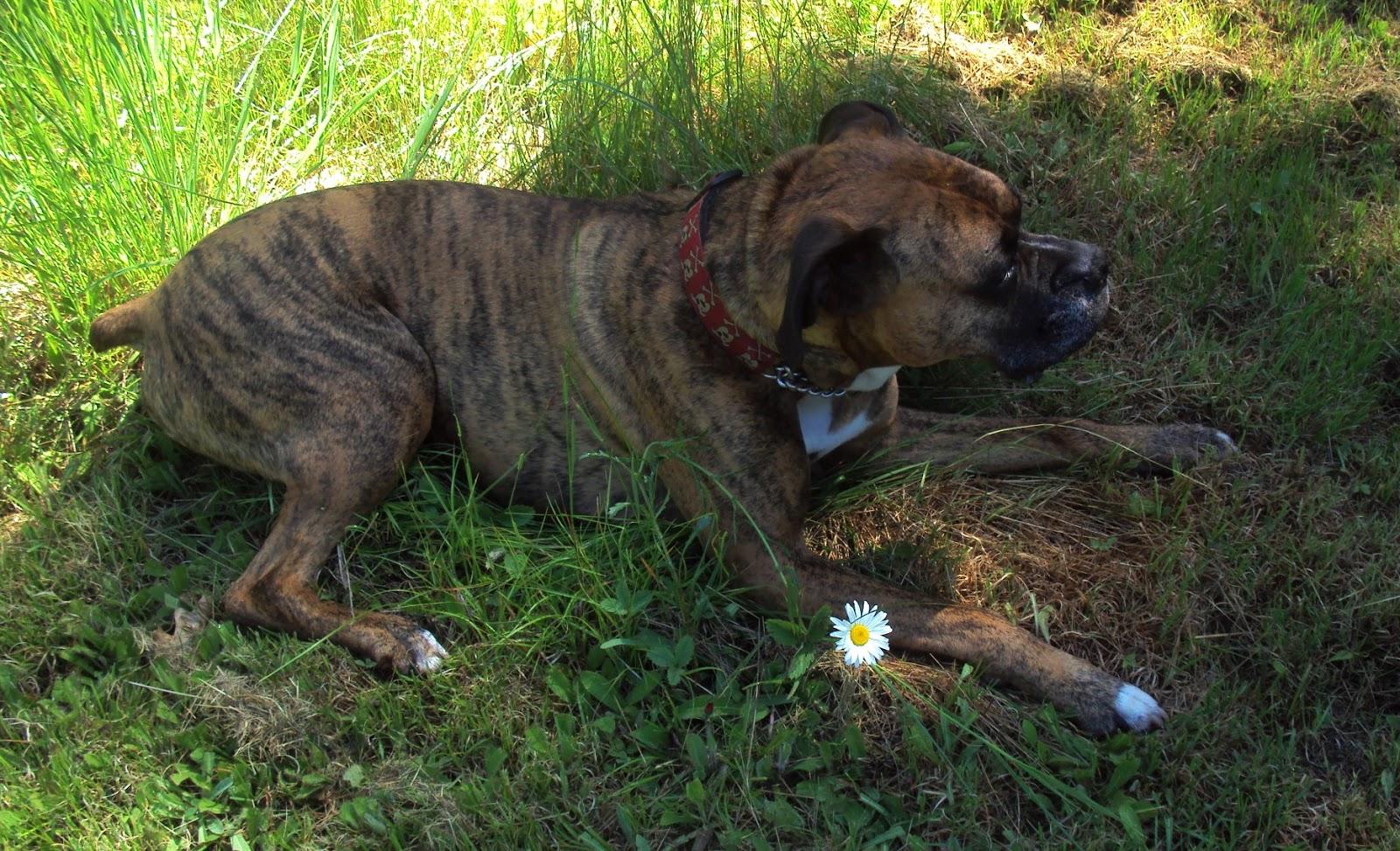 Aggressive Dog Training Ottawa