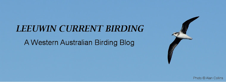 Leeuwin Current Birding