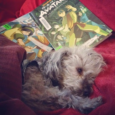 Murchie sprawls on a red blanket, front paws outstretched. Behind him are two volumes of Avatar: The Last Airbender comics. The most visible of these features a young boy of Asian descent with a blue arrow painted on his forehead. He adopts a fighting stance with several other people arrayed behind him.
