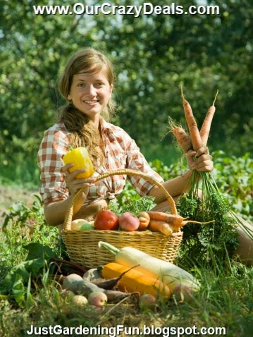 Teenage Girl Harvested Squash Carrots Peppers Fruit and Vegetables in Basket