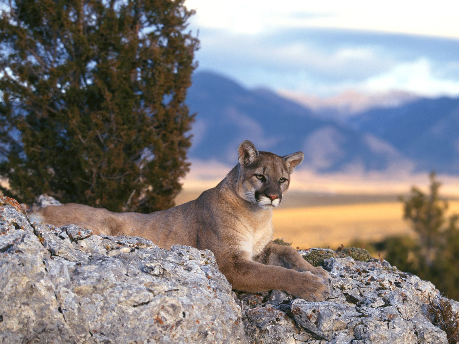 Mountain animals pictures - photo#27