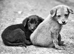 Hayvanlar duygusal varlıklar