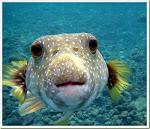 Ikannya Lucu Ya