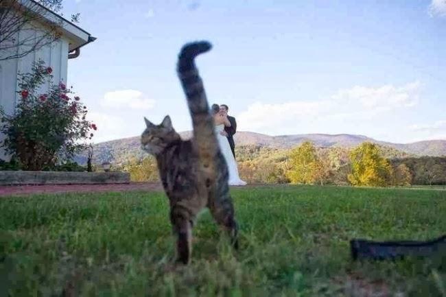 Возможно, коту никогда и не нравилась эта парочка.