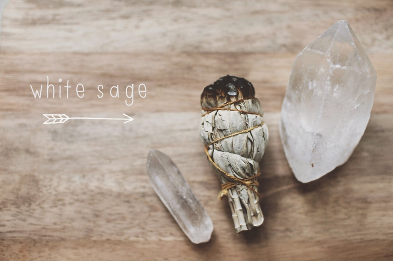photo white sage by Dara Muscat