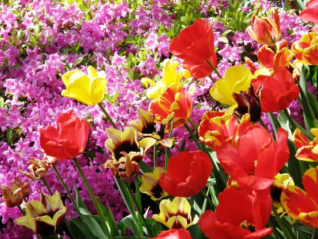Flowers names flowers wallpapers for Flowering plants names and pictures