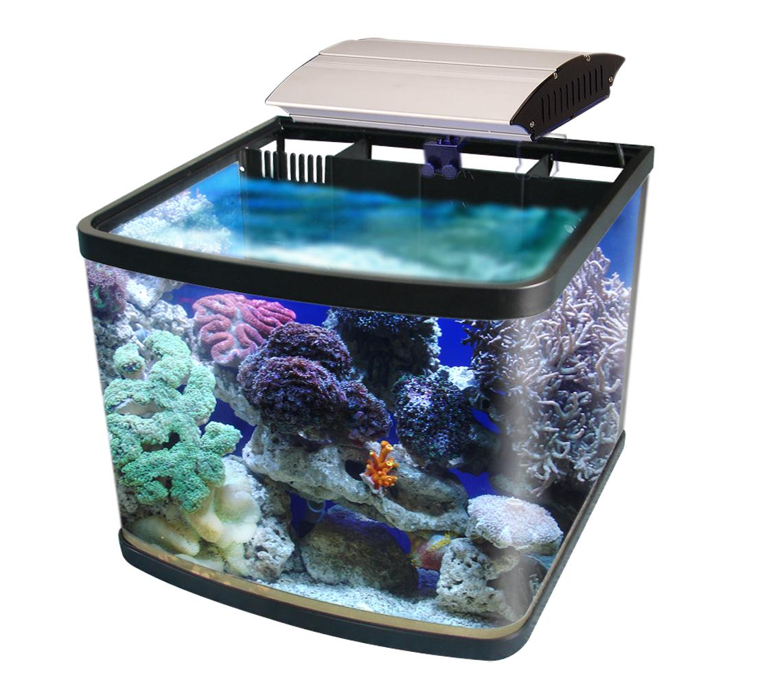 trendy home decorations fishbowl aquarium designs. Black Bedroom Furniture Sets. Home Design Ideas