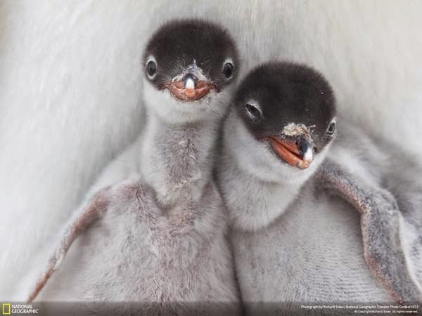 12.) Two newly hatched best friends - 12 Photos That Prove Nature is Awesome