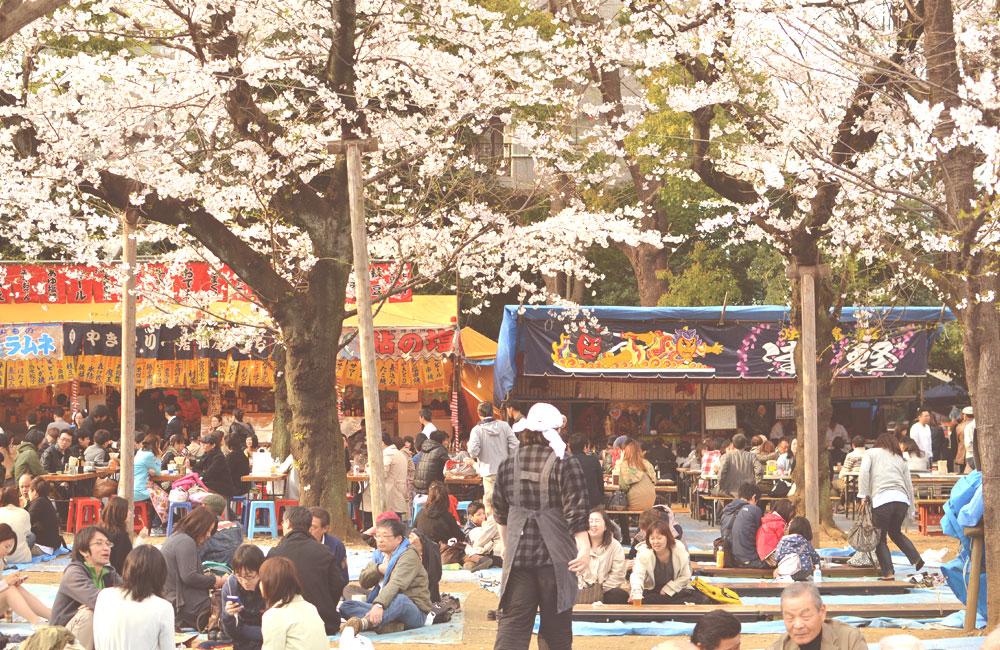 花見の風景の写真