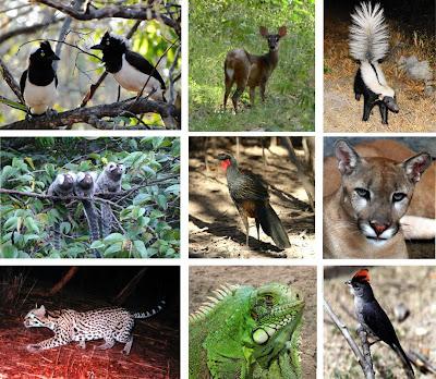 Fauna do Bioma Caatinga