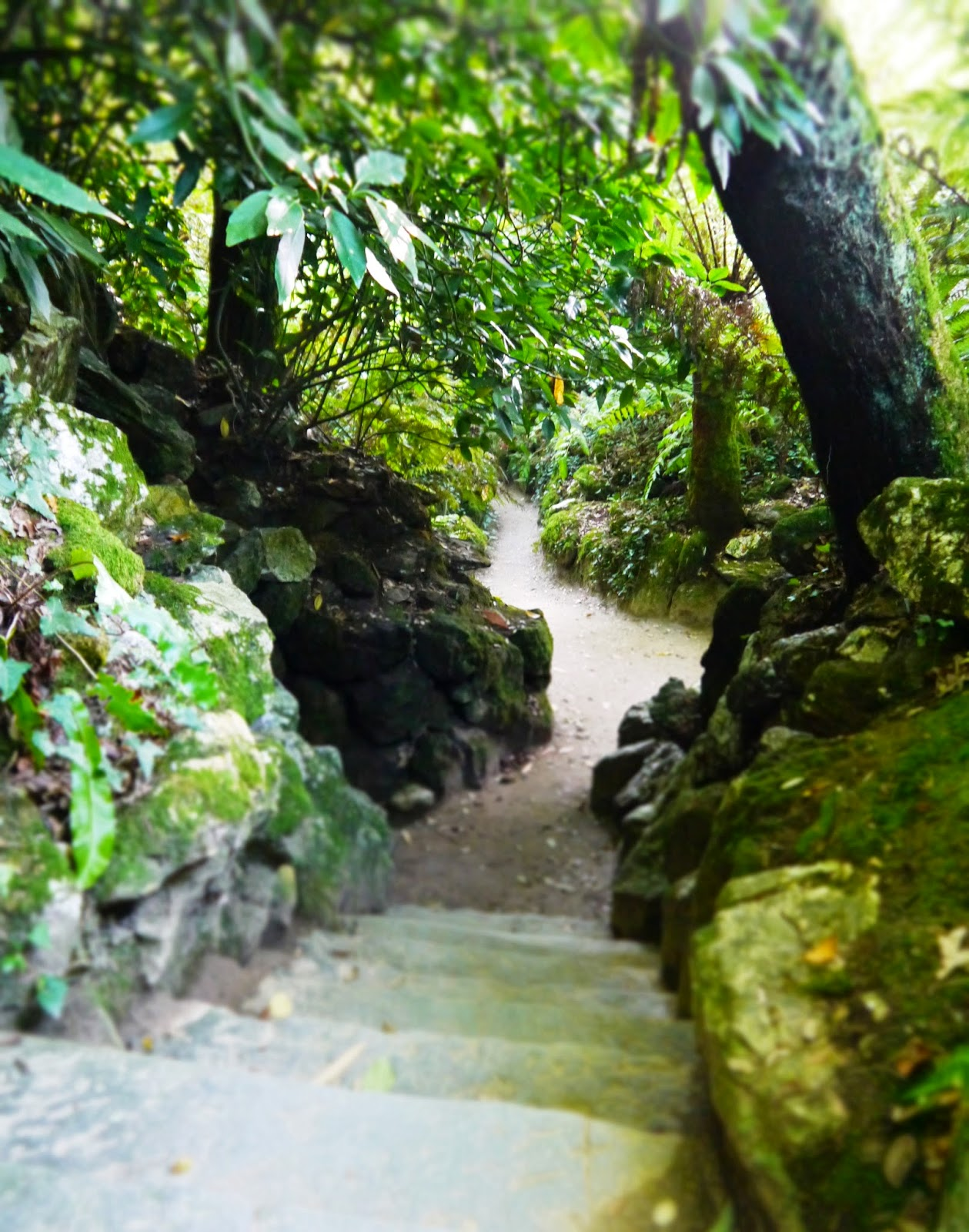 The Lost Gardens of Heligan, Cornwall - sunken footpaths