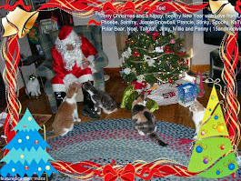 Merry Christmas 15 and Meowing!