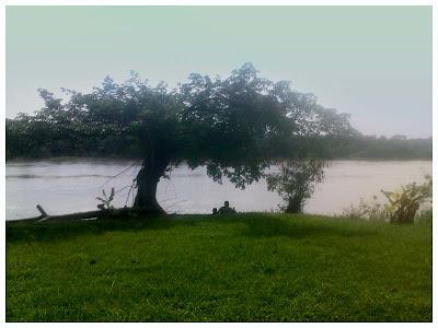 JWW Birch: Kawasan di belakang Resort Pasir Salak ini