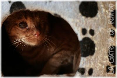 Elmo, en la cueva del rascador