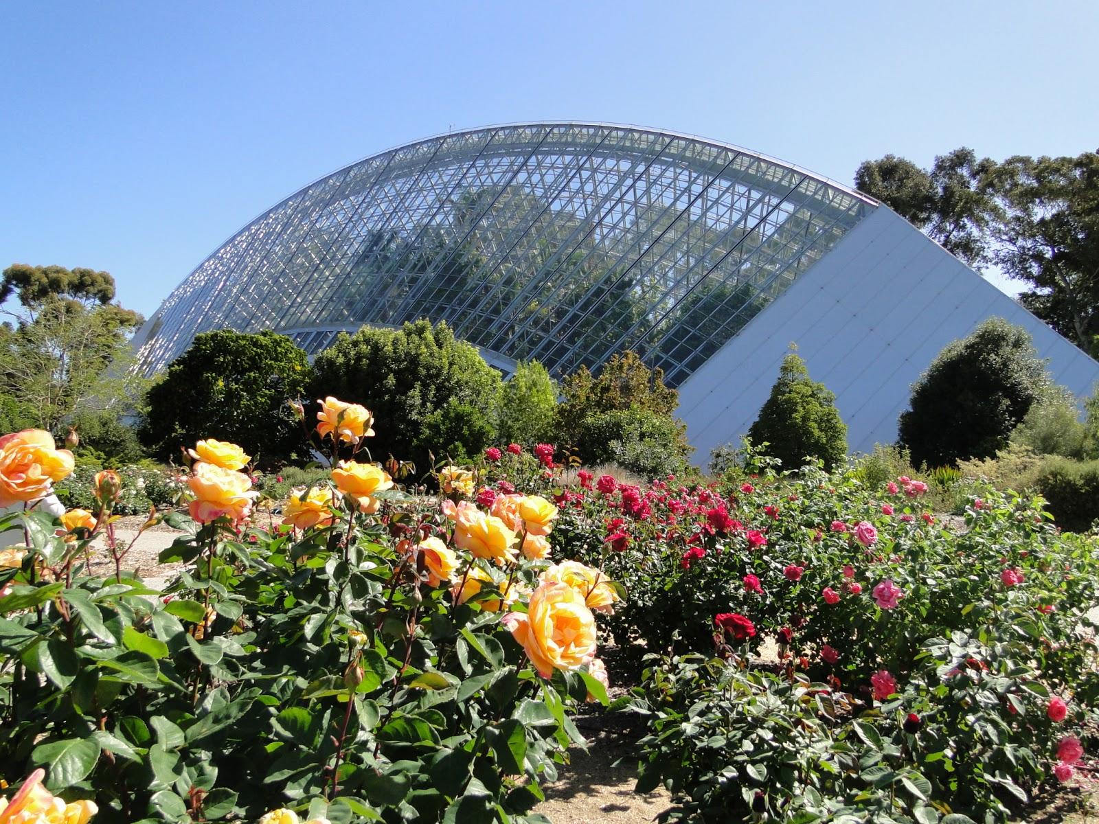 Adelaide botanic garden fred in oz 39 for Adelaide gardens