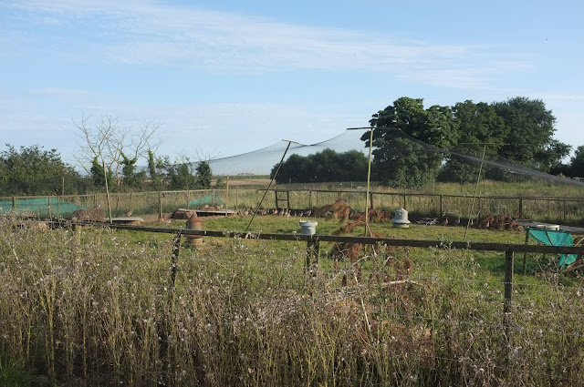 pheasant farm